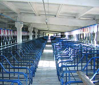 Оборудование для содержания маточного поголовья свиней (СТС)