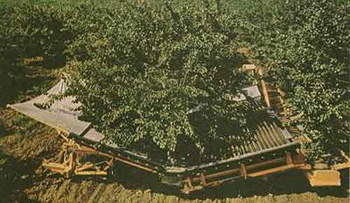 Комбайн двухагрегатный для уборки плодов (КПУ)