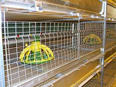 Оборудование для выращивания бройлеров (ТББ)