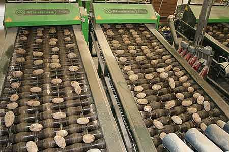 Машина для резки семенного картофеля (Miedema PGS)