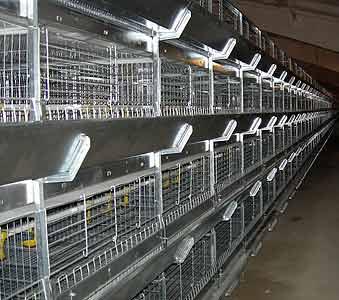 Оборудование клеточное для выращивания ремонтного молодняка кур-несушек (ОАРМ)