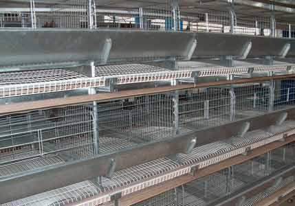 Оборудование клеточное для выращивания промышленного стада кур-несушек (ОКН(-Ш))