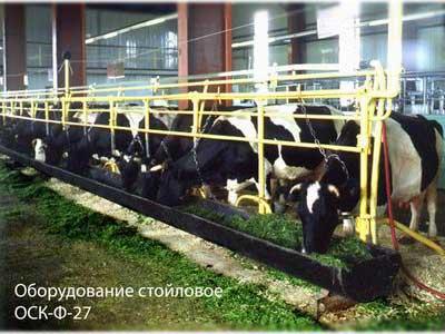 Оборудование стойловое для коров для привязного содержания (ОСК-Ф-27)