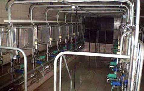 Установка для доения коров в доильных залах (Елочка)
